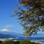 桜の名所は静岡市ではどこにあるのか?静岡市の桜スポットをご紹介!