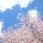 桜の名所は多摩地区にはたくさんある!一度は行きたい桜スポット