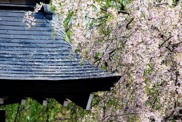 桜の名所は秋田県にもたくさんある!一度は訪れたい桜の名所とは?