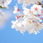 高崎市にある桜の名所は有名な場所ばかり!おススメの桜スポット